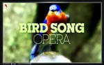 Bird song opera (Professional)