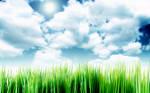 Sky Over The Grass