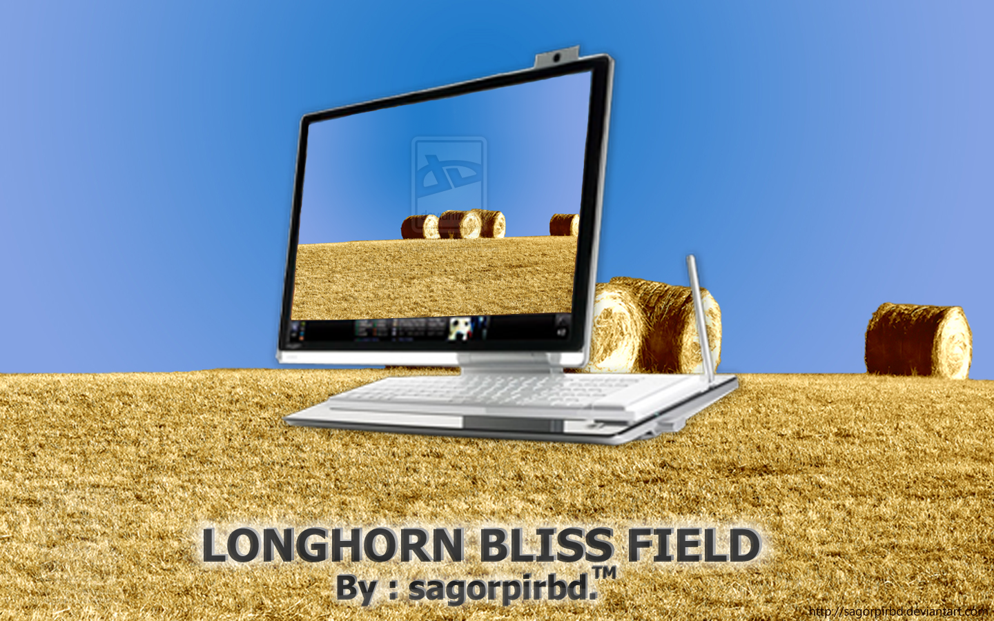 Longhorn Bliss Field_2