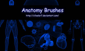 PS Brushes - Anatomy