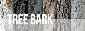 Tree Bark Texture Set