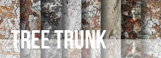 Tree Trunk Texture Set by YvelleDesignEye