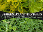 2 Pack Green Leafy Textures
