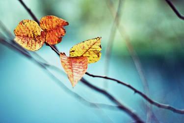 autumn by Lubitella