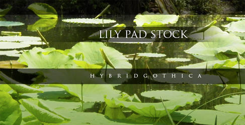 HG Lily Stock. by hybridgothica