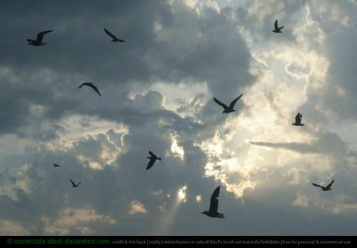 Seagull (Bird) Brushes