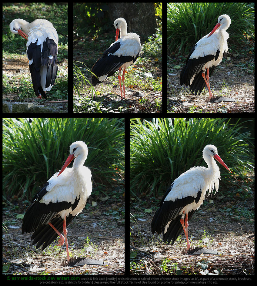 White Stork Stock Pack by Esmeralda-stock