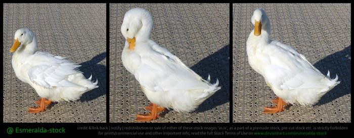White Duck Stock Pack