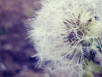 Purple Dream by Brebenel-Silviu