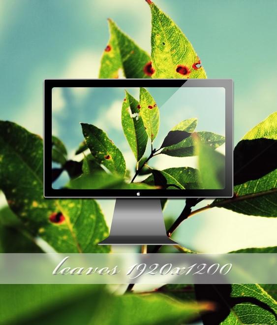 leaves by SABBAT2010