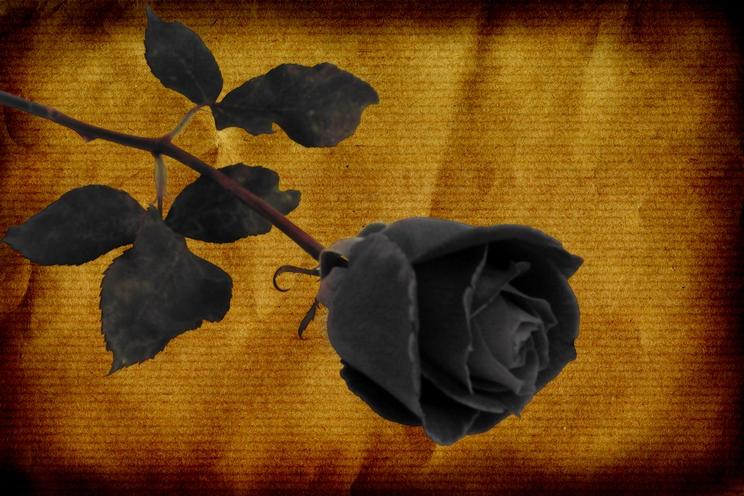 Rose3 by SABBAT2010