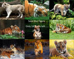 Save Our Tigers 1