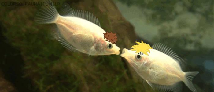SpUK Fishy Kiss