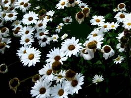 Flower Wallpaper Pack 1 by Fallensbane
