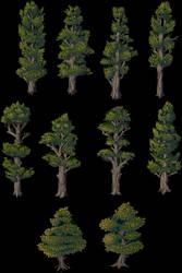 Tree Patch - Colab