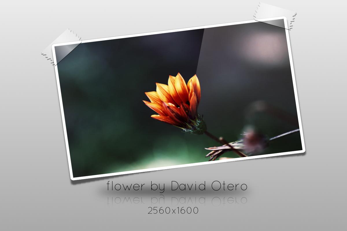 Flower by DavidOteroNavarro