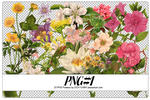 PNG#1. Flowers