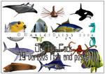 Sea Life Pack