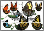 Butterfly Boat Pack