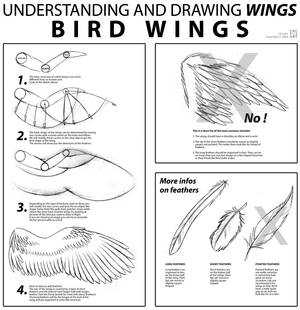 Bird Wings Tutorial