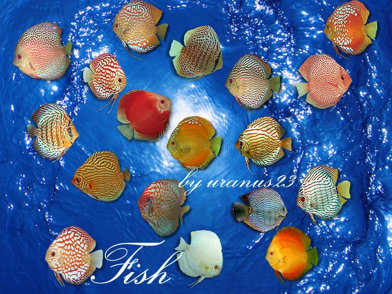 Fish by uranus23