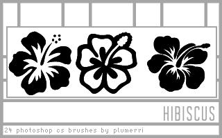 24 Hibiscus Dingbat Brushes by plumerri