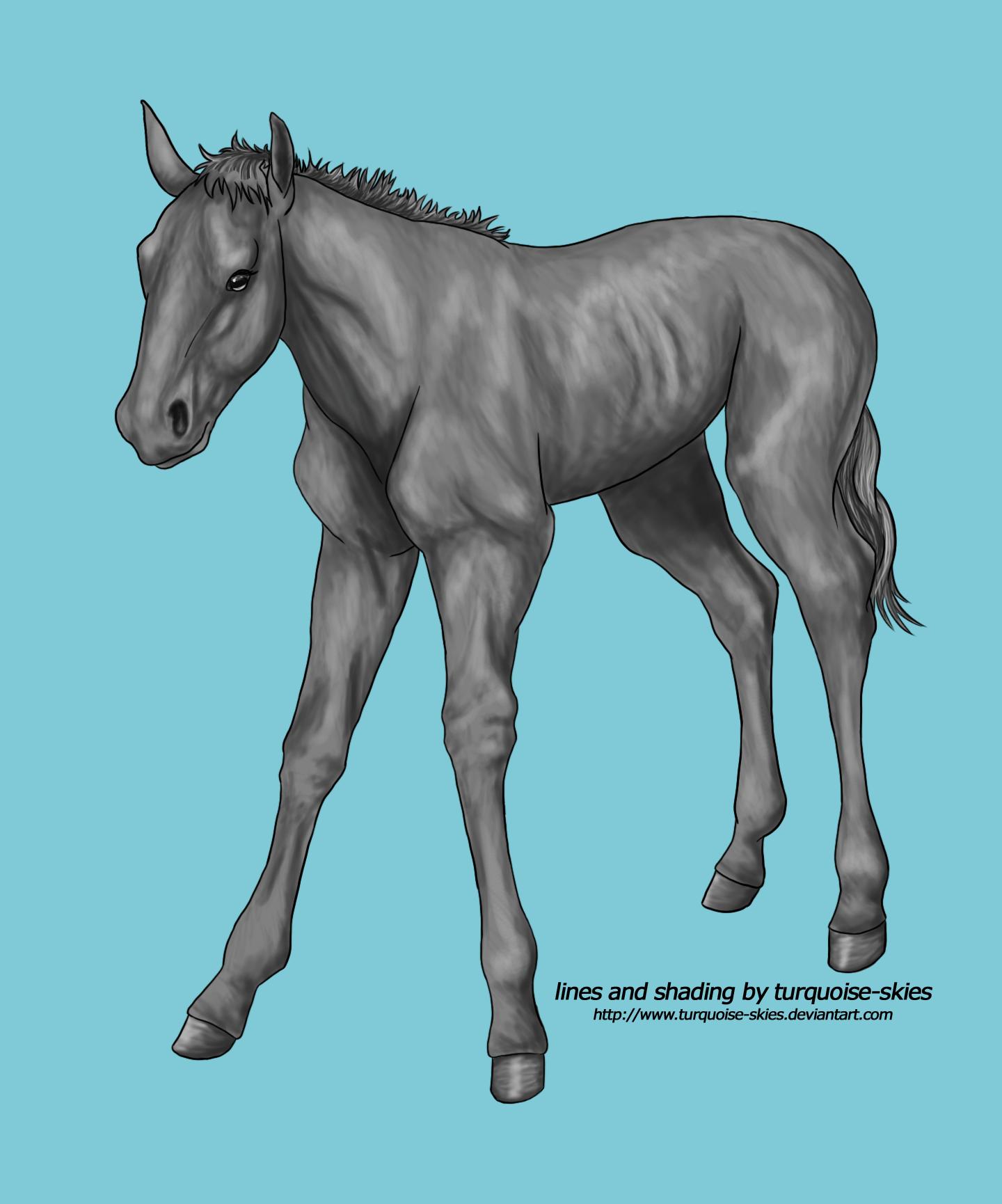 Wobbly foal FREE GREYSCALE!