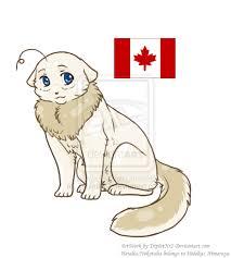 Neko!Canada x Neko!Reader: Home sweet Maple PRO by Ikezhecool on