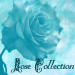 Rose Collection by Tatianasaphira