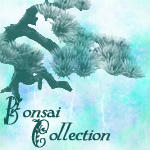 Bonsai Brush Collection by Tatianasaphira