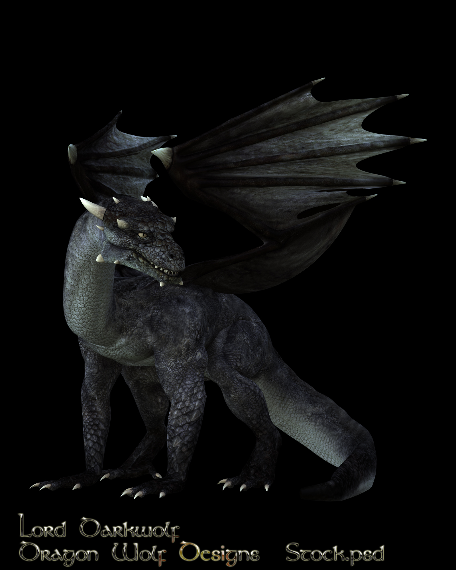 Black Dragon stock two