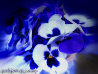Blue Bouquet by Tara by taralse