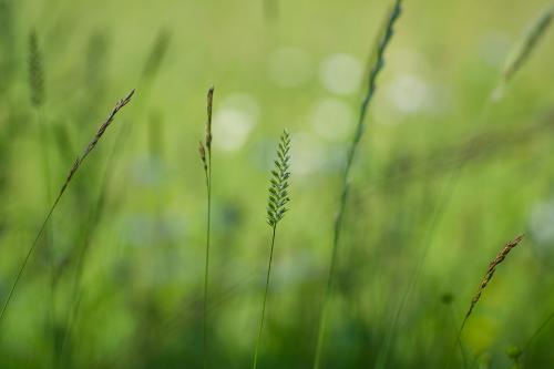 Grass Wallpaper Pack by Guymer