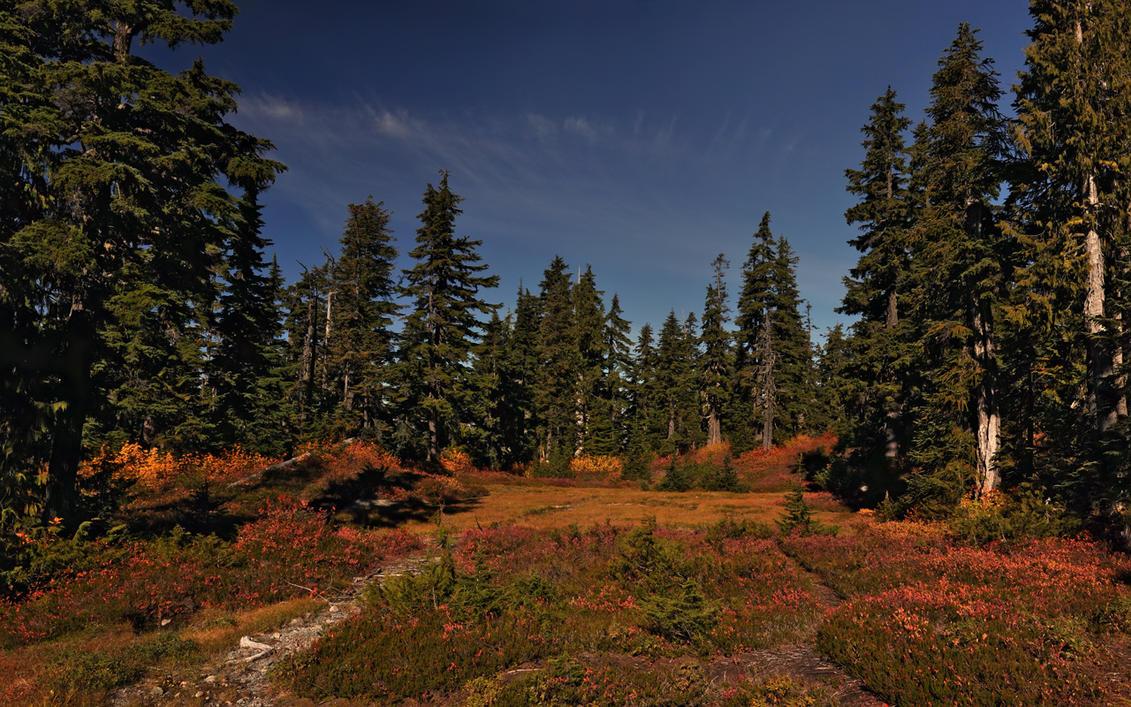 картинки с лесом