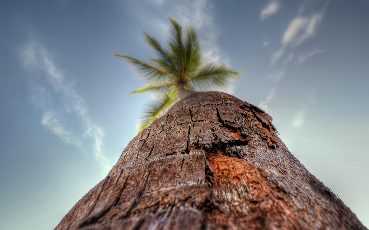Palm by IvanAndreevich