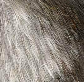Fur Tutorial by jezebel