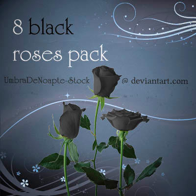 8 Black Roses Pack by UmbraDeNoapte-Stock