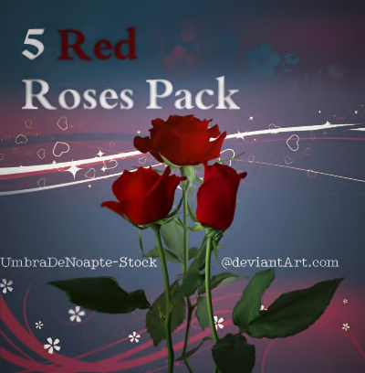 5 Red Roses Pack