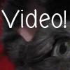 Mouse head video by ms-manuscript