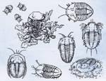 Trilobite Coloring Pages