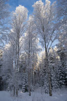Winter forest and sky psd 3 - Unrestricted stock by MariaLoikkii