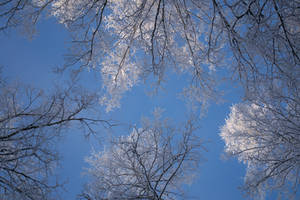 Winter forest-sky scene psd - unrestricted stock by MariaLoikkii