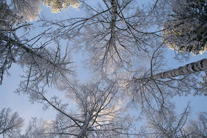 Winter forest-sky scene psd 2 - unrestricted stock by MariaLoikkii