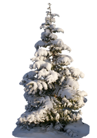 Christmas tree psd - unrestricted stock by MariaLoikkii