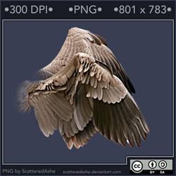 PNG Wings