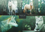 PSD 05 |Wolves|