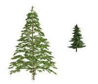 Fir tree PSD file