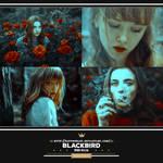 PSD #116 - Blackbird