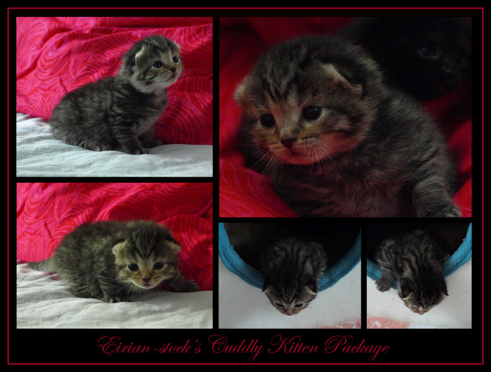 Cuddly Kitten Package by Eirian-stock