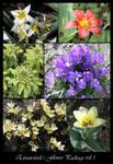 Flower Package vol 1